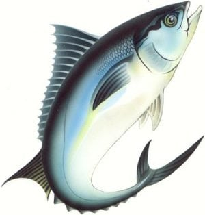 Ocean Mitramas | Indonesia Sustainable Tuna Products Suppliers